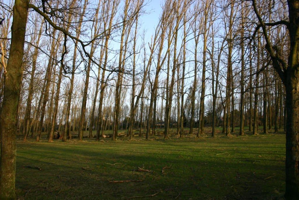 Rotunden efter orkanen i januar 2005 rotunden efter orkanen d. 5 januar 2005 3 3