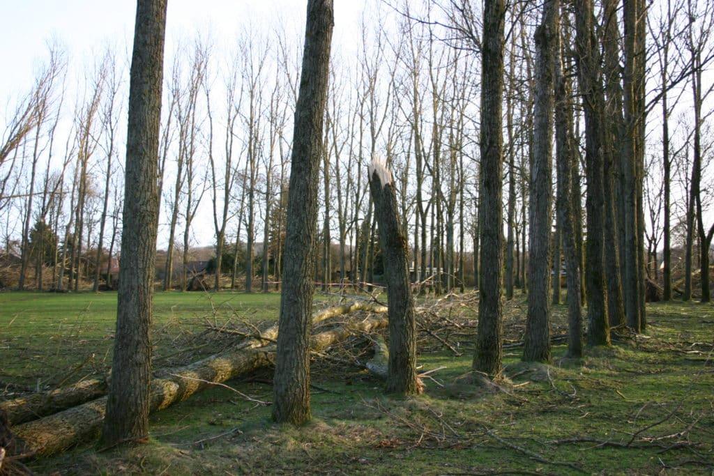 Rotunden efter orkanen i januar 2005 rotunden efter orkanen d. 5 januar 2005 5 5
