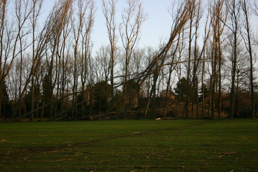 Rotunden efter orkanen i januar 2005 rotunden efter orkanen d. 5 januar 2005 6 6