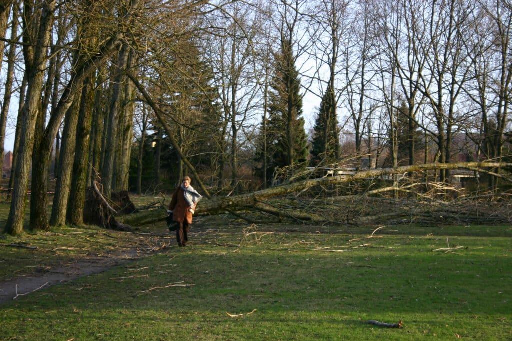 Rotunden efter orkanen i januar 2005 rotunden efter orkanen d. 5 januar 2005 7 7