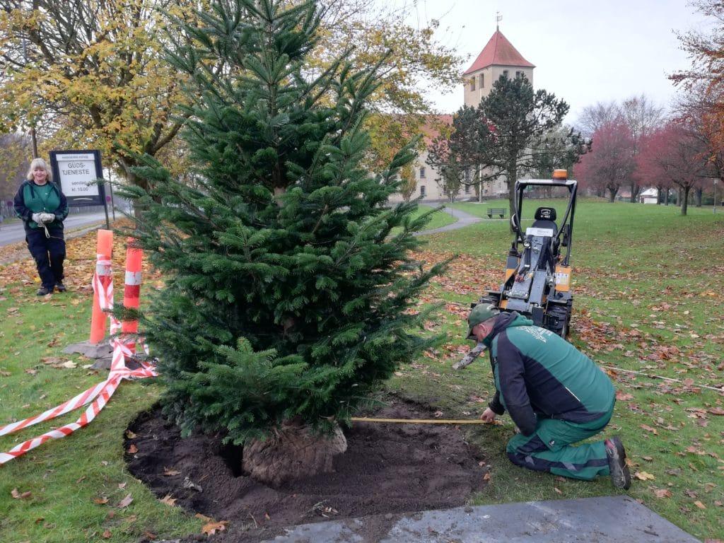Nyt juletræ plantet ved hasseris kirke nøjagtig placering 3
