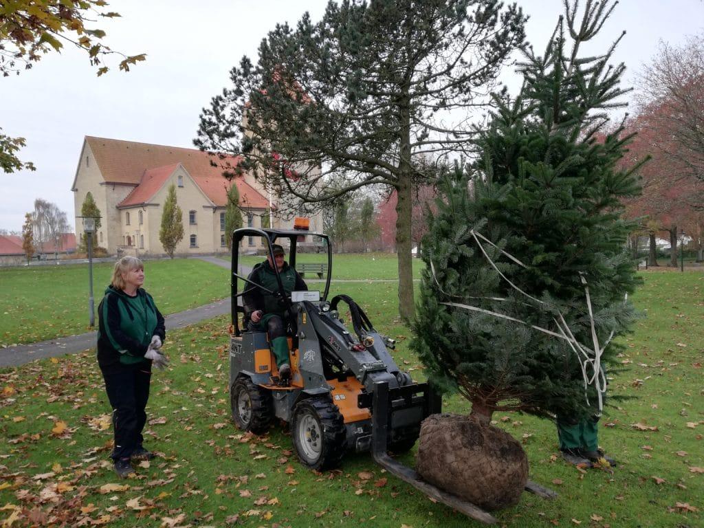 Nyt juletræ plantet ved hasseris kirke træet ankommer 2