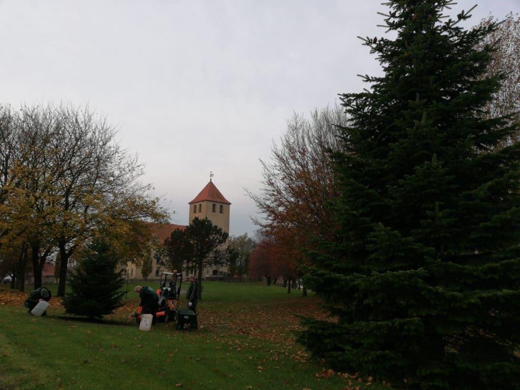Nyt juletræ plantet ved hasseris kirke træet vandes 4