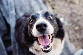 Medlemsstatus på sorthøj hund 1